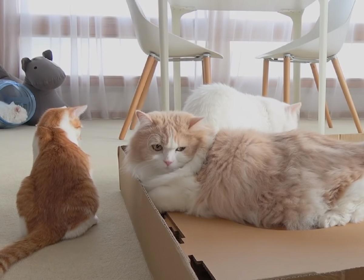 gattini costruzione torre vincitore