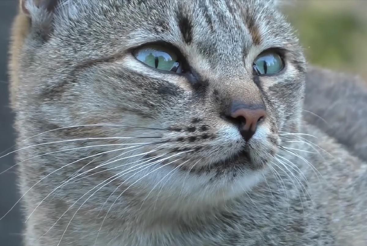 gattino energia negativa sensibile