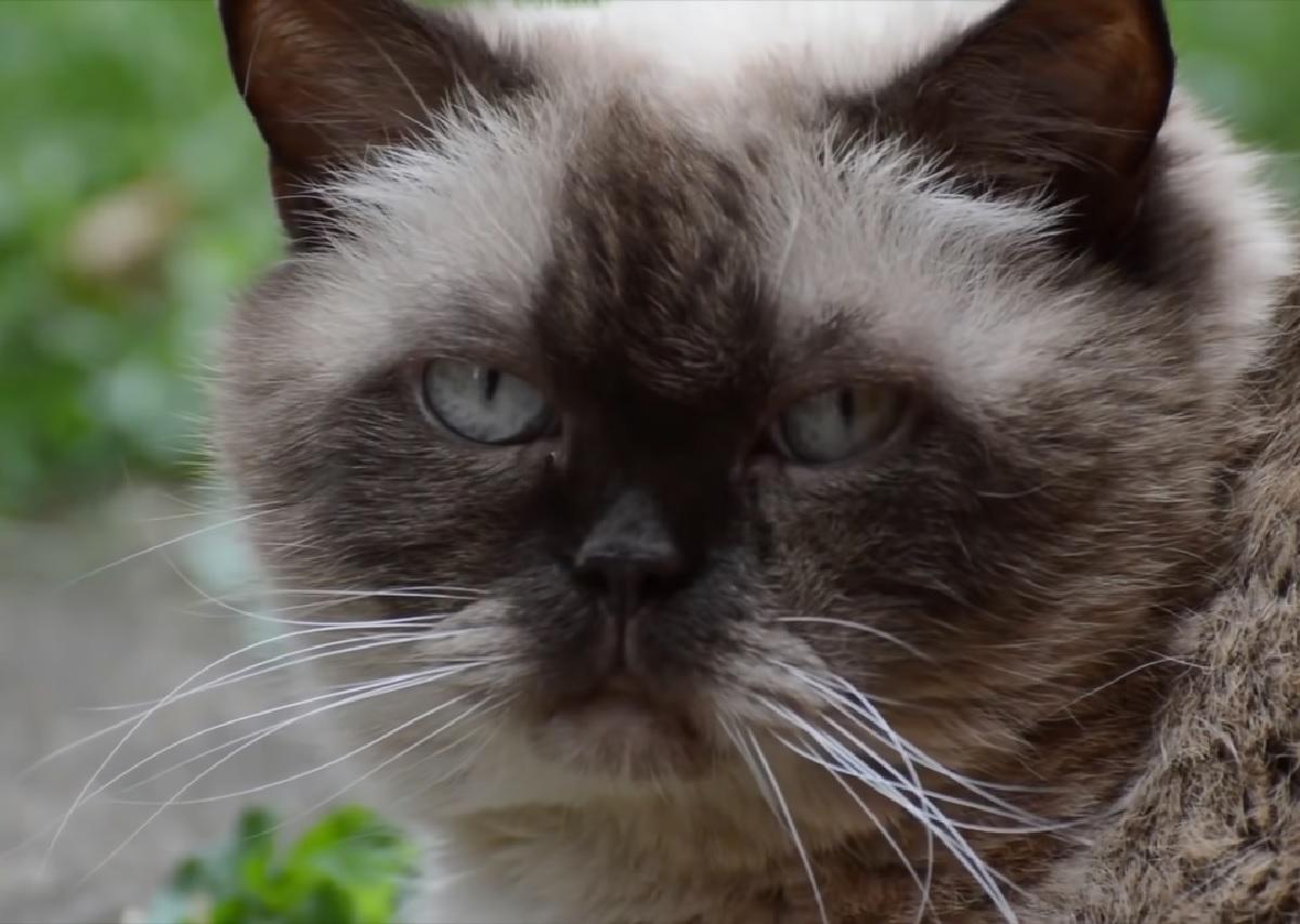 gatti credenza passato medioevo magia