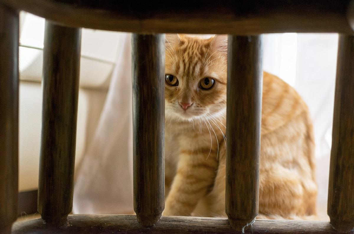 gattino cura oggetto