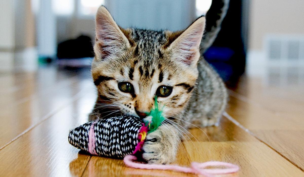 giochi per gattini piccoli