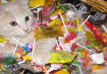 gatto con caramelle