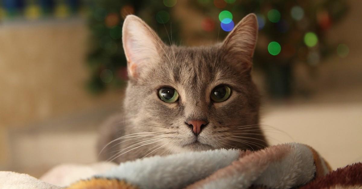 gattini a capodanno