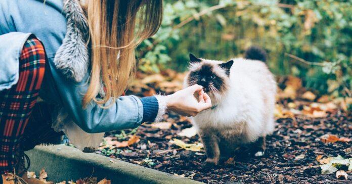 cibo dai gatti randagi