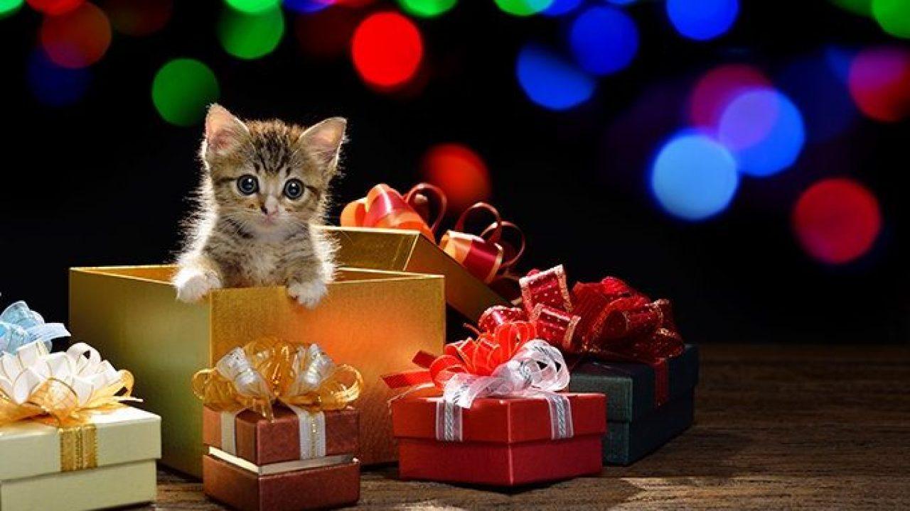 cosa non fare con il gattino a Natale