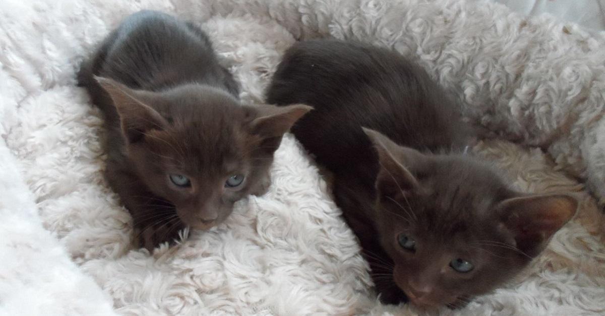 cuccioli di gatto su lettino bianco