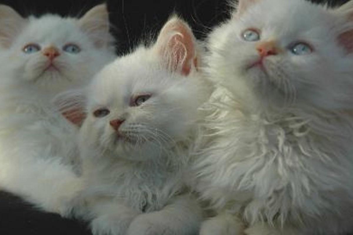 piccoli gattini