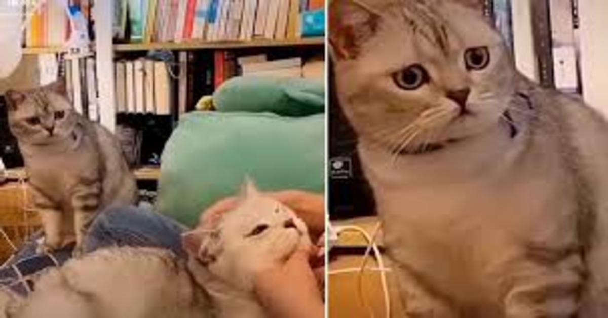 gatto triste perchè la padrona accarezza altro micio