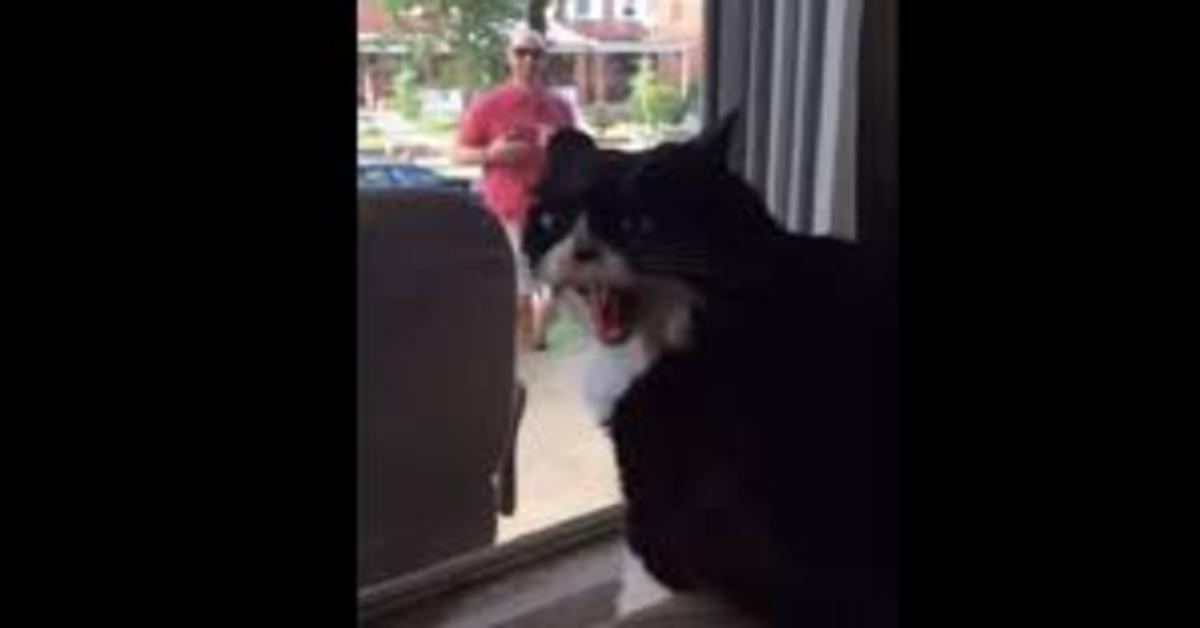 gatto vede dalla finestra il padrone che arriva con un cane