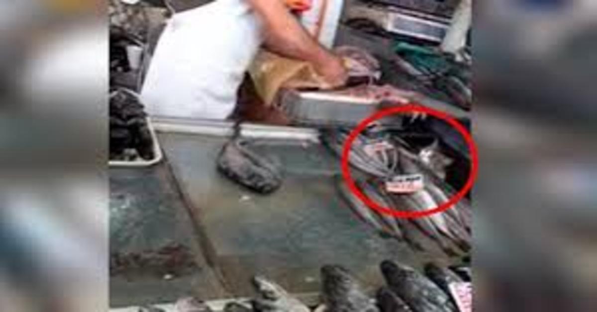 gatto ladro di pesce in new mexico