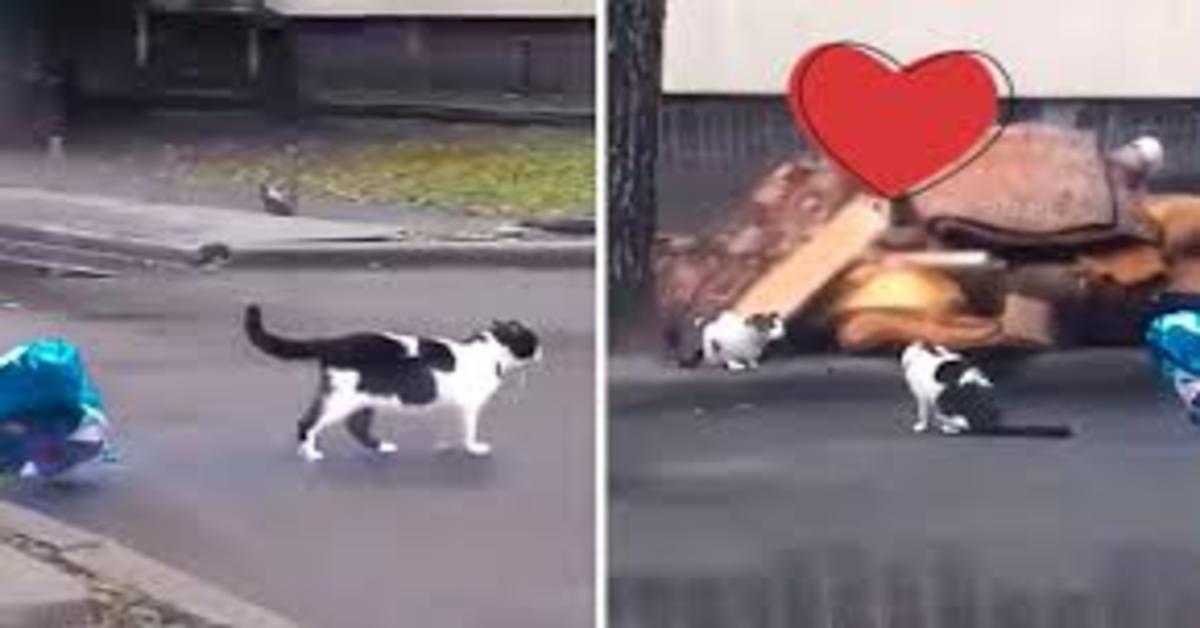 gatto regala palloncino due foto