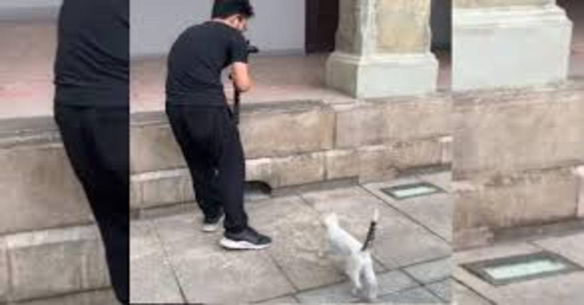 gatto posa per fotografo