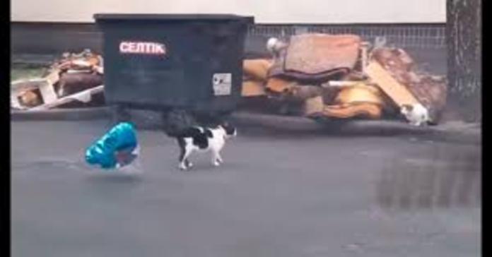 gatto con palloncino a cuore