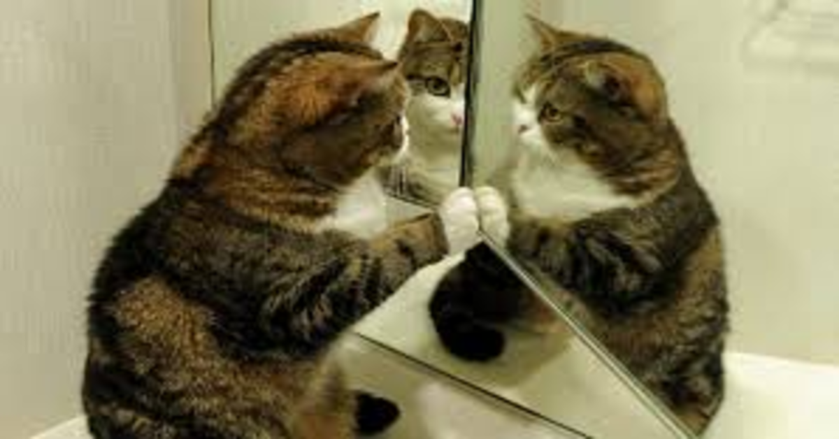 Maru si guarda allo specchio