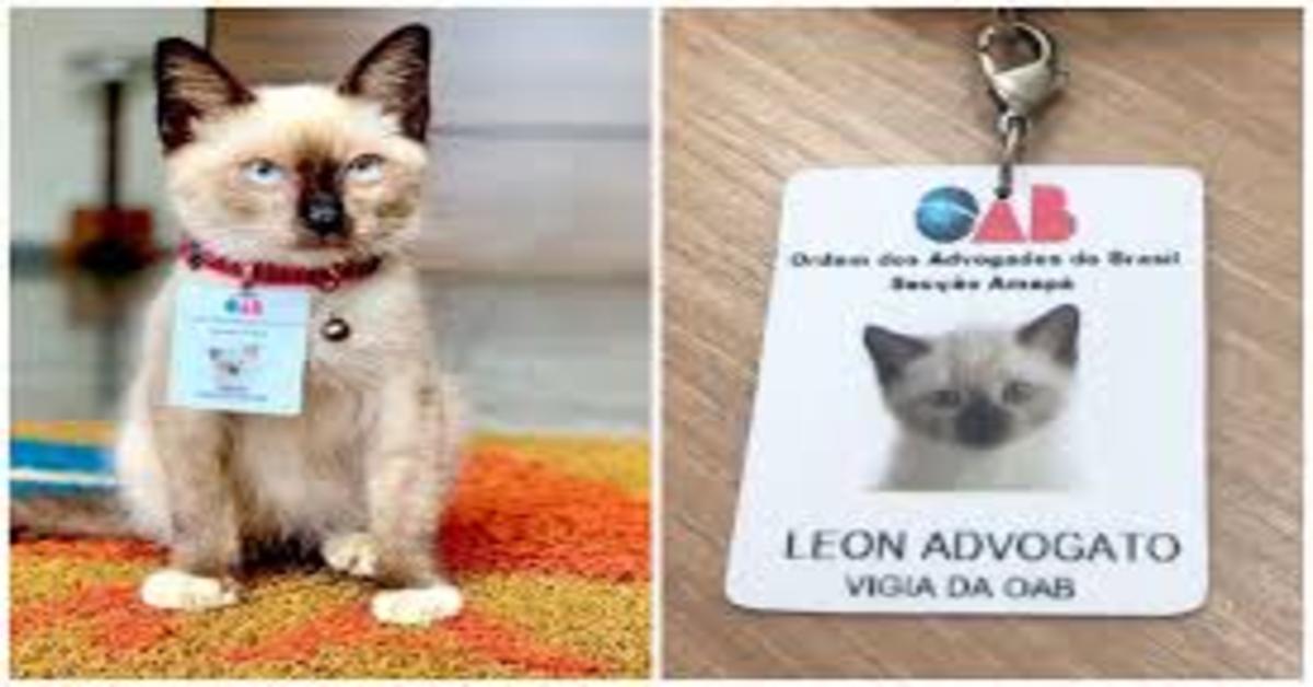 Leon avvogatto due foto