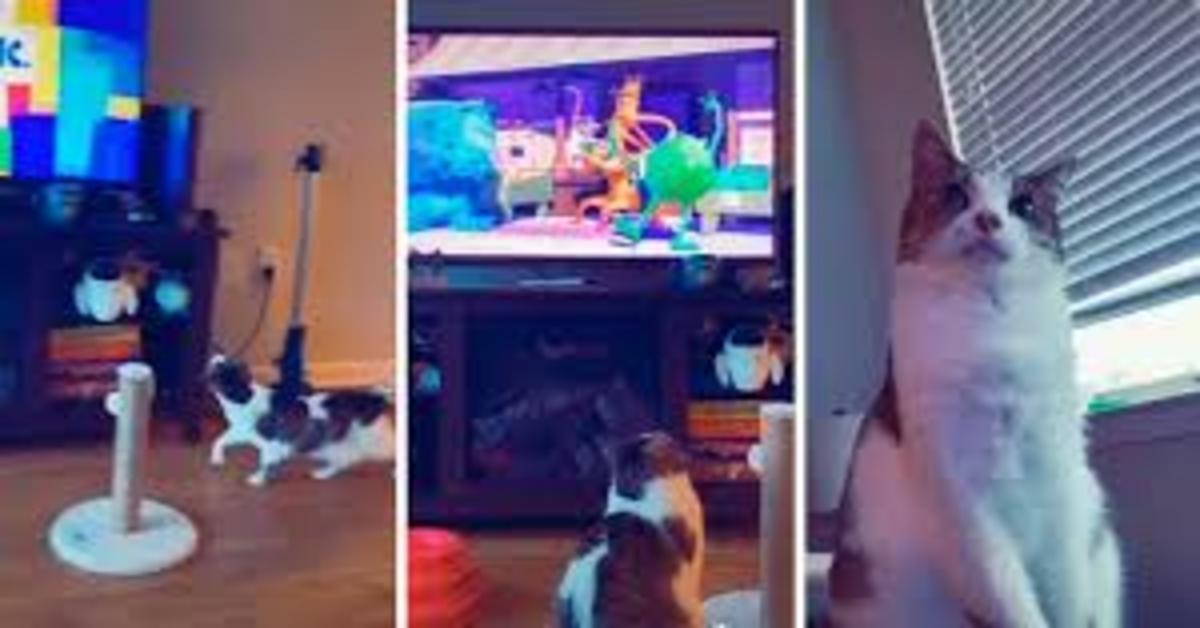 gatto guarda tv tre foto