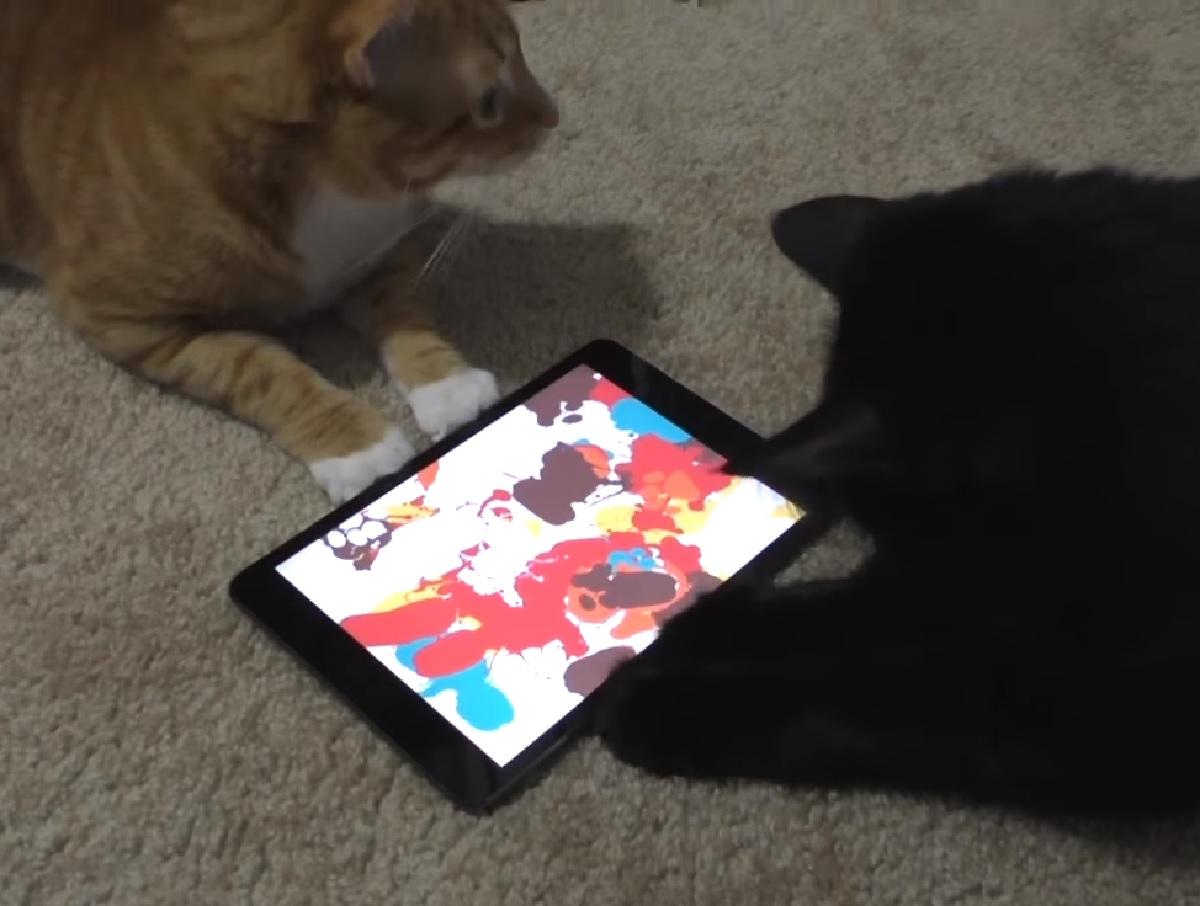 cole gattino insieme fratellino artisti