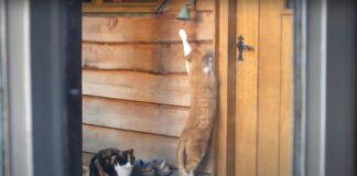 gattini chiedere cibo