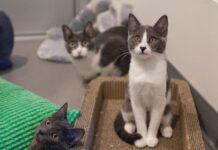 gattini foglio alluminio