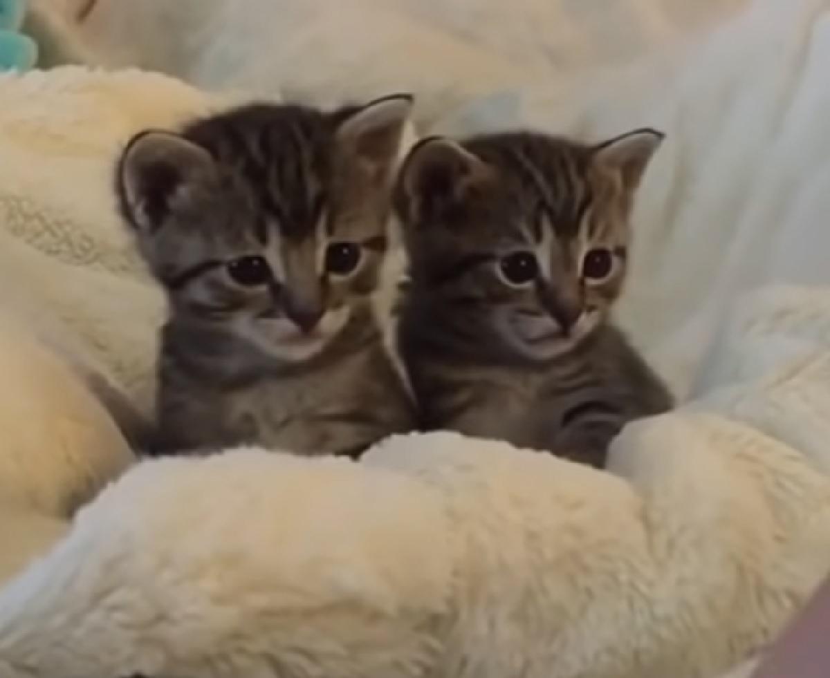 gattini celtici protagonisti video