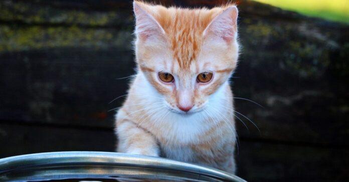gatti paura acqua