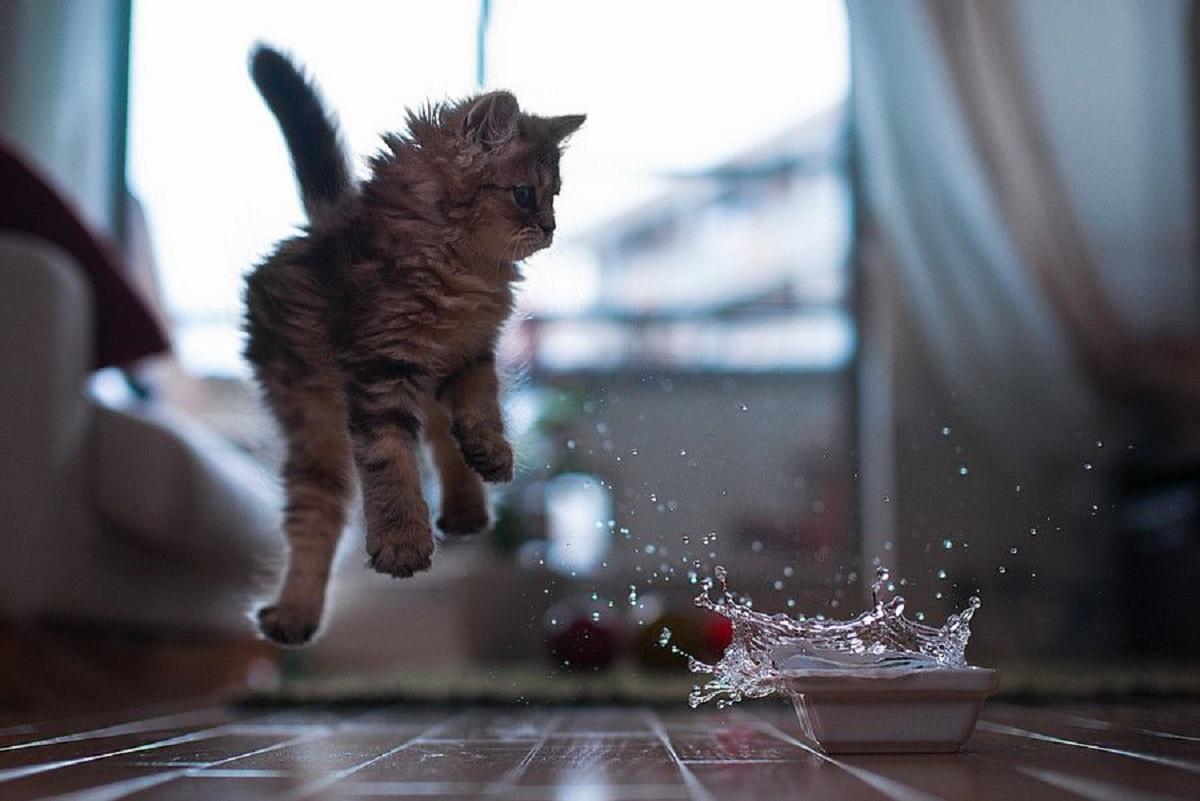 micio gattini paure