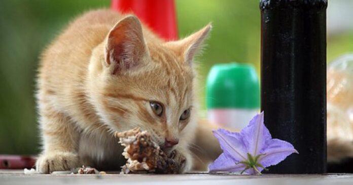 gattino cibo speciale