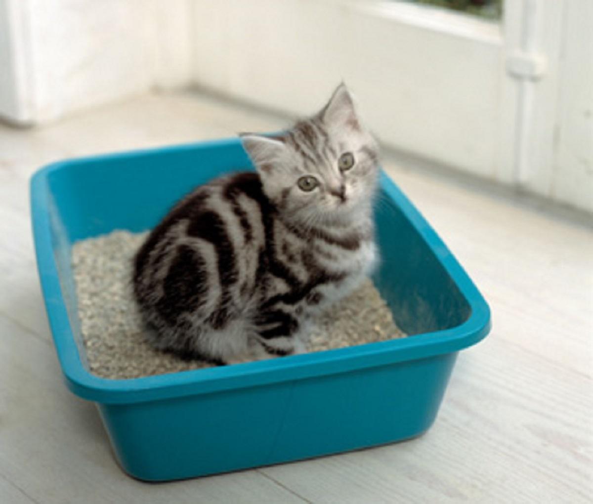 gattini lettiera sabbietta importante