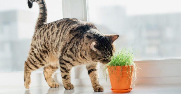 gattini odori odiati