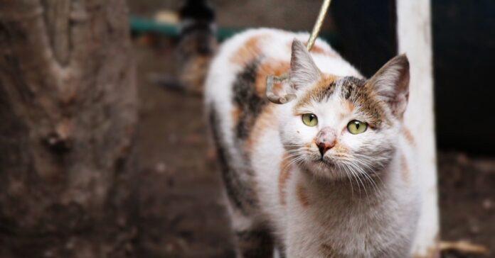 gattino oggetto casa