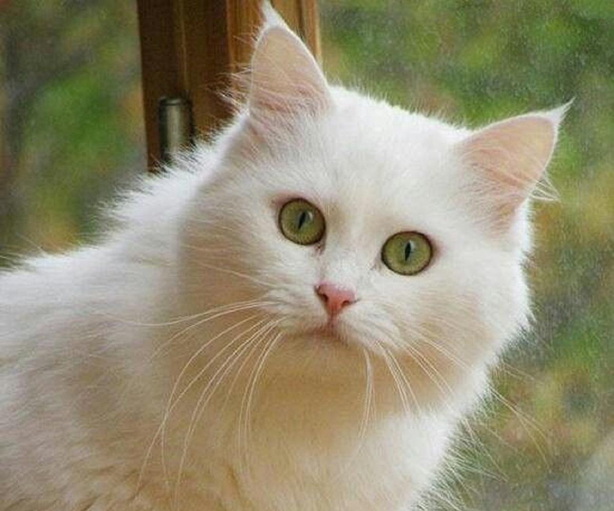 gatti studio scientifico australiano