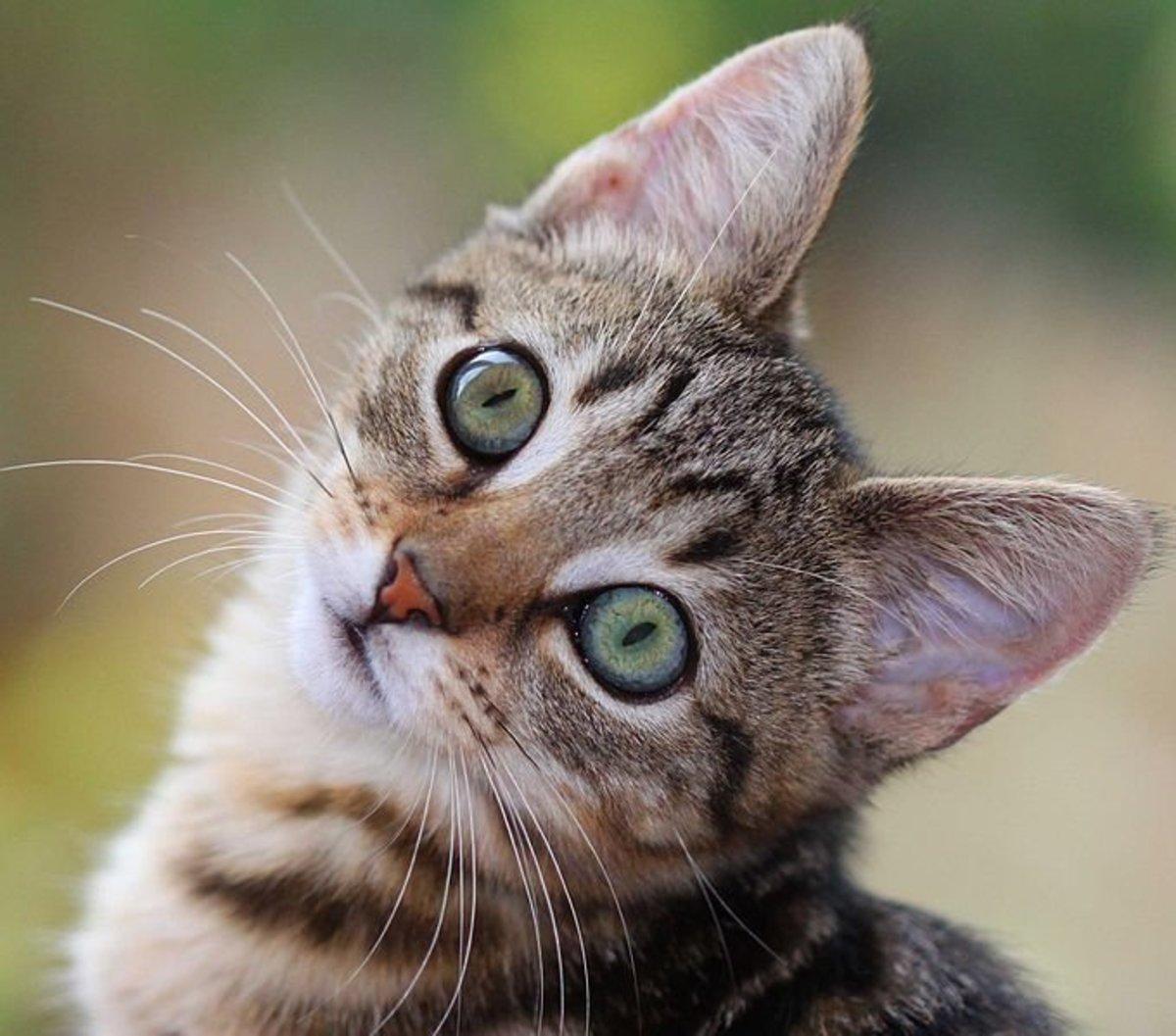 gattino annusa ascella per emozione