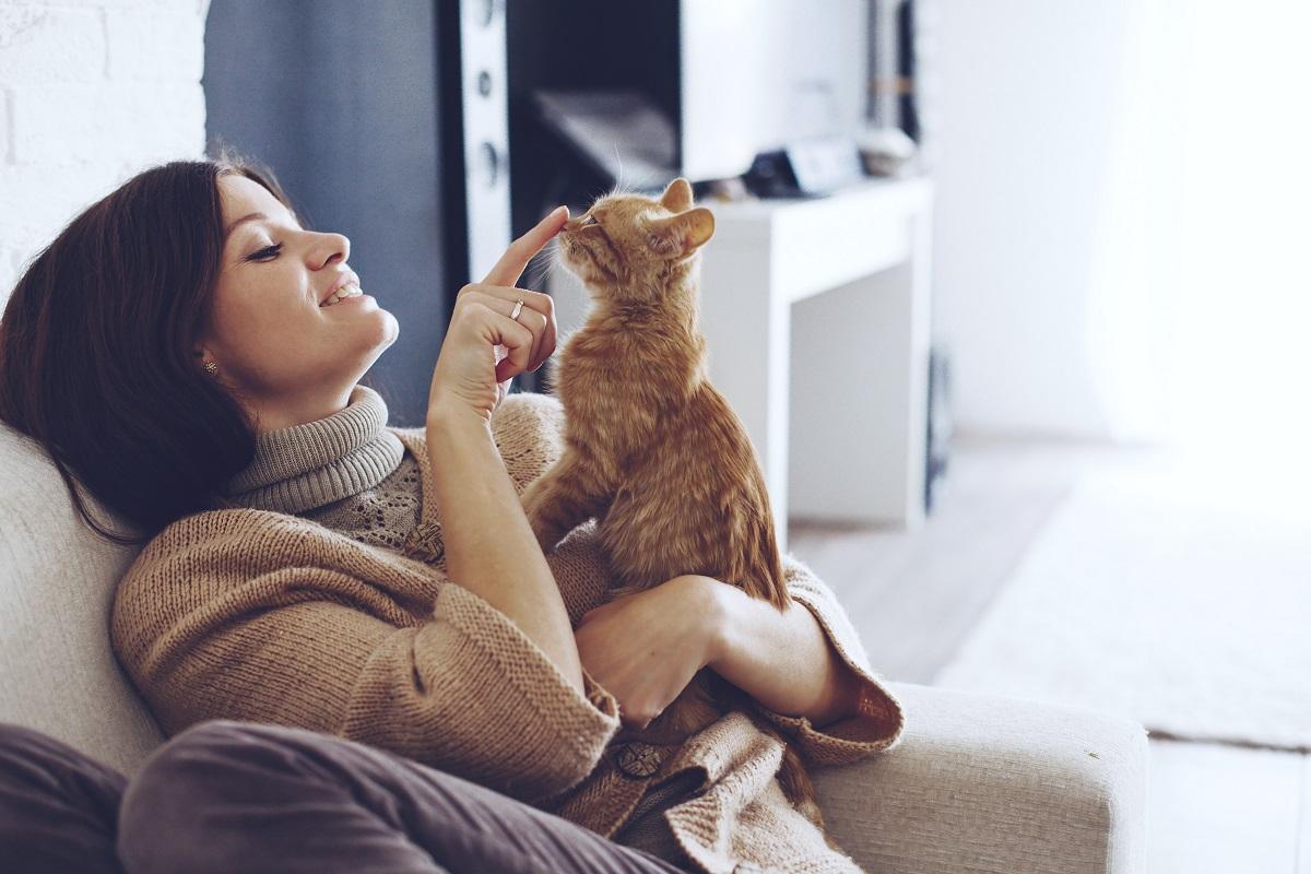 gattini comportamenti buffi come annusare ascella