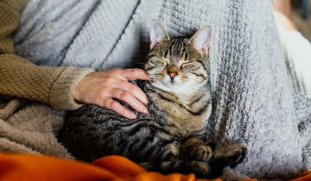 accarezzare il gatto