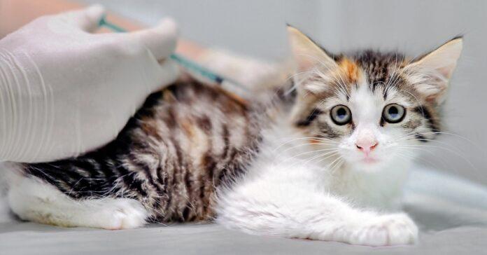vaccinazione gattini