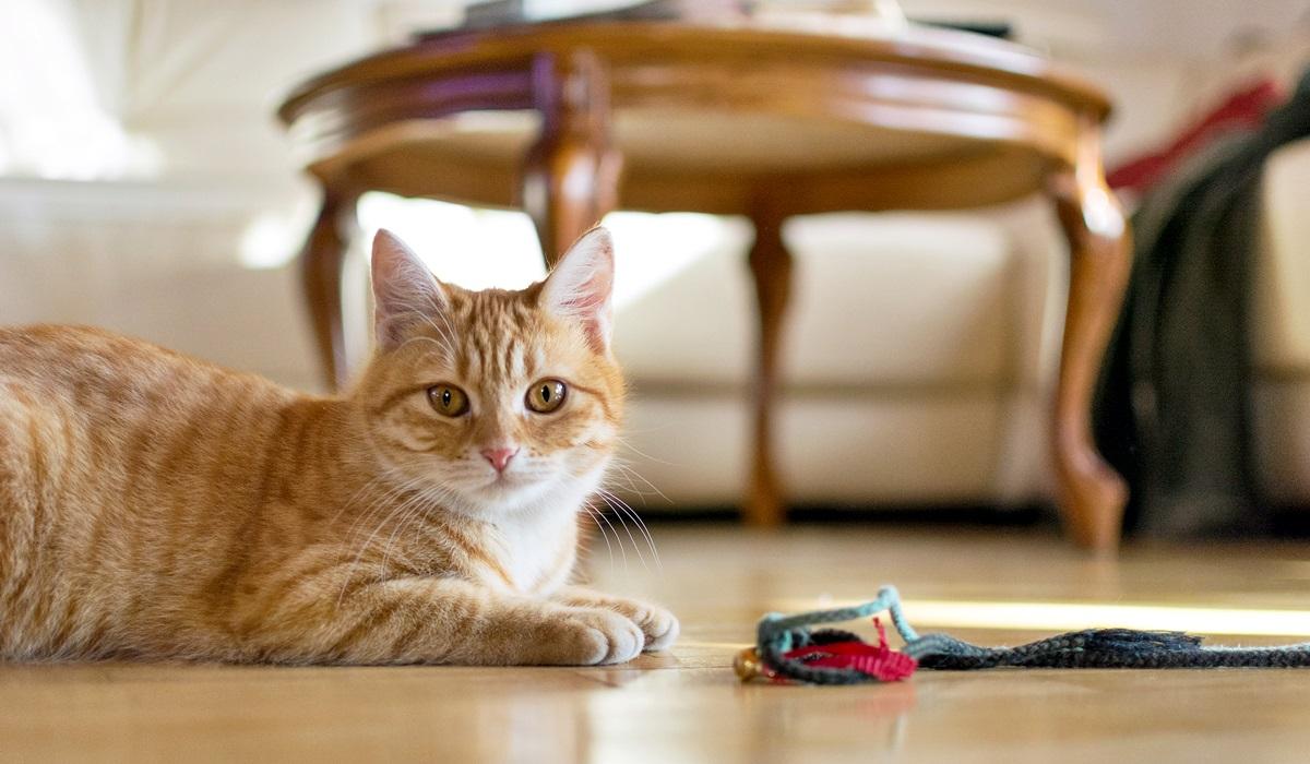 gatto che gioca sul pavimento