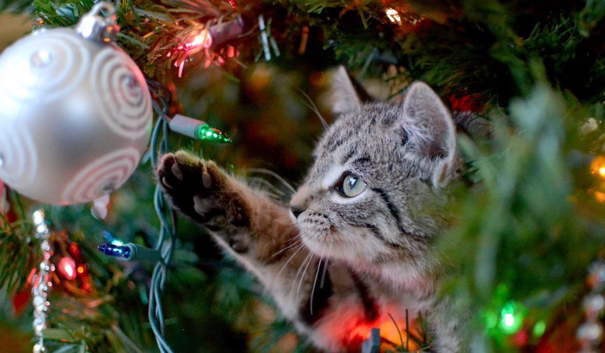 gattino che gioca con le palle dell'albero di natale