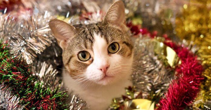 gatto tra le decorazioni natalizie