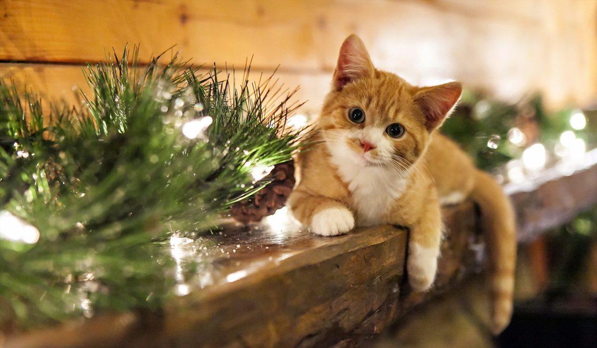 gatto tra le luci di natale