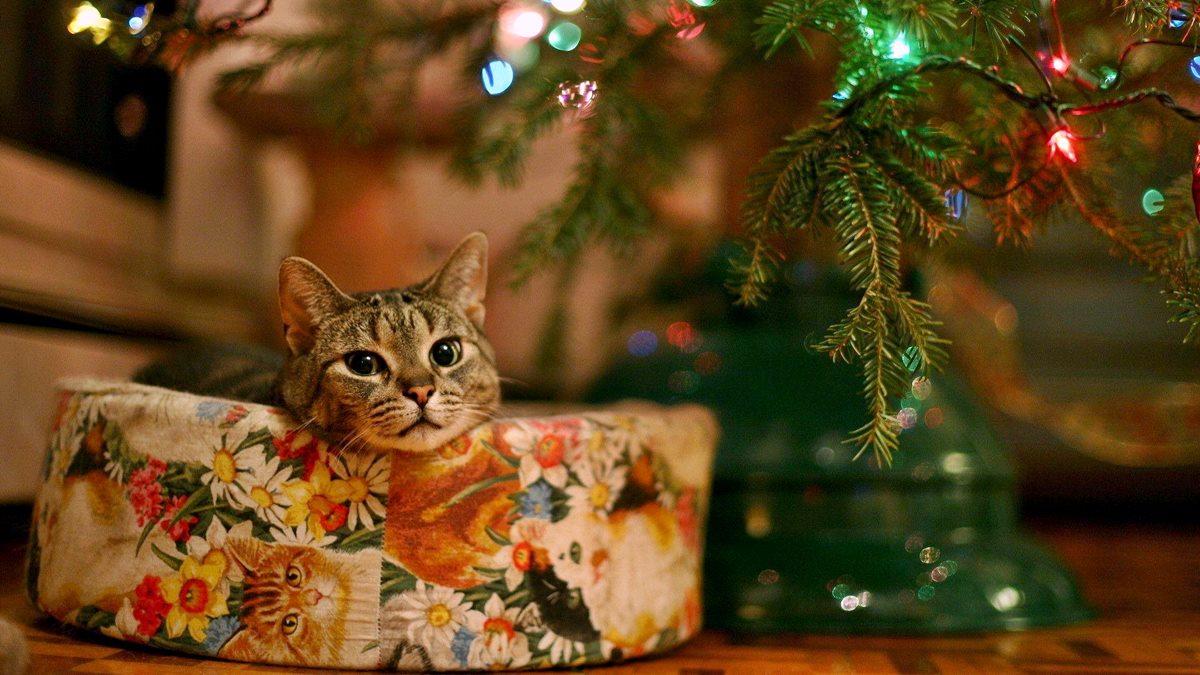 gatto che dorme su un pacco regalo