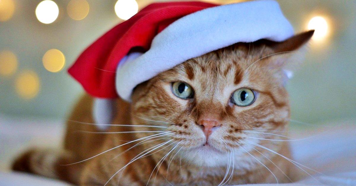 gatto con il cappellino da babbo natale