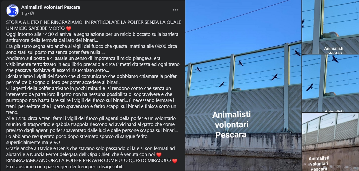 post su facebook sul gattino