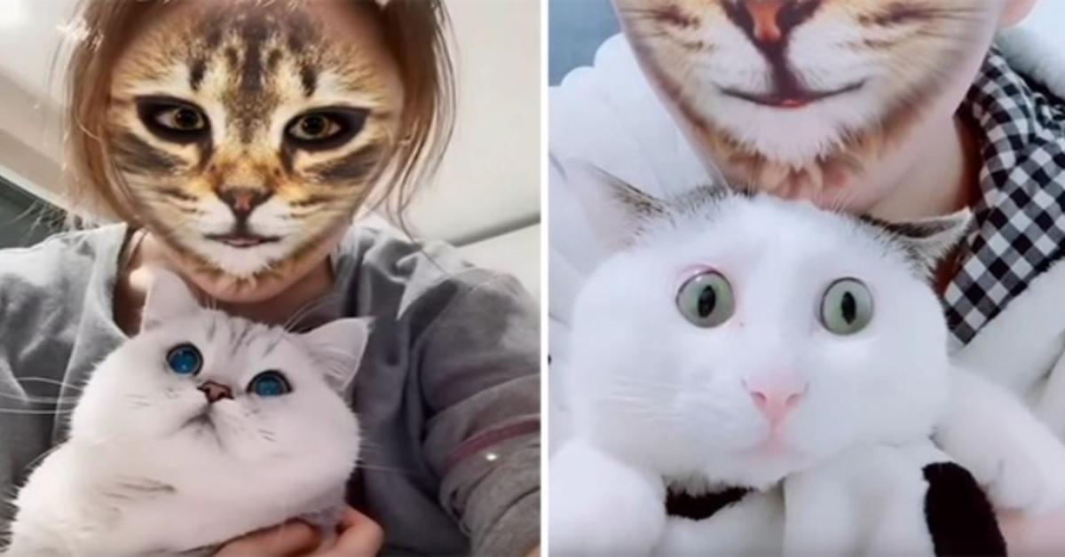 reazioni gatti alla padrona con filtro TikTok. Due foto