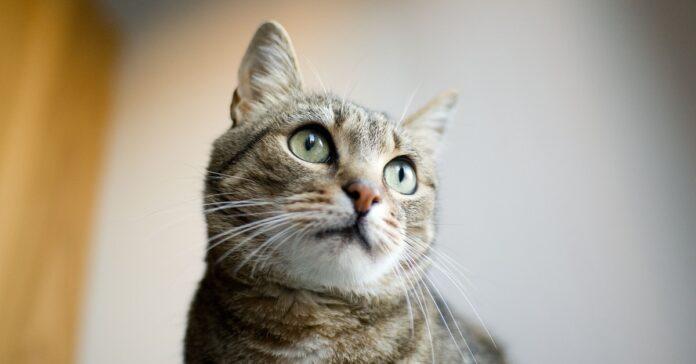 gatto pensieroso