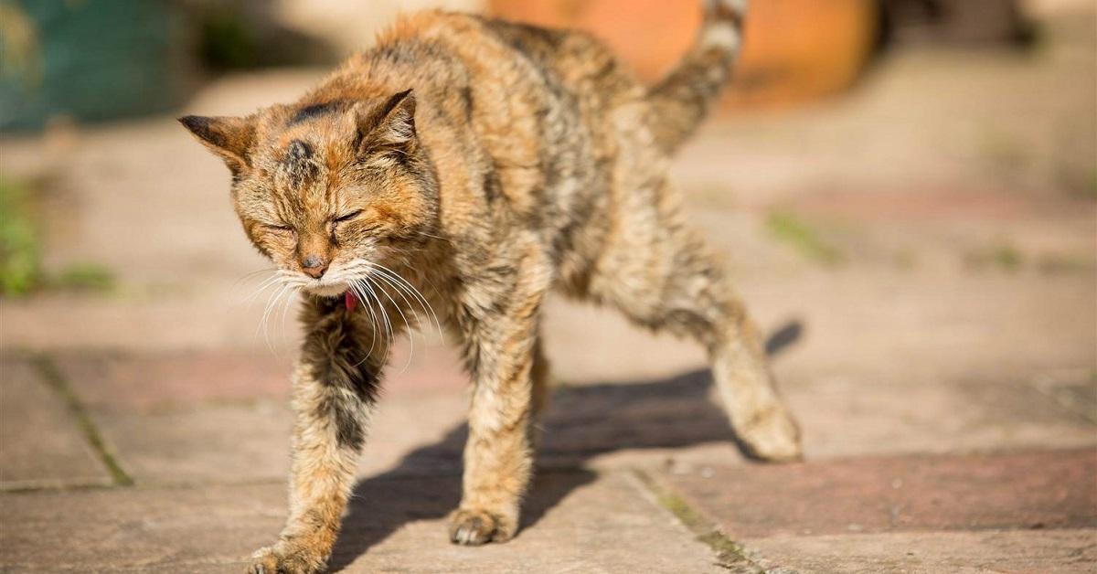 gatto che barcolla