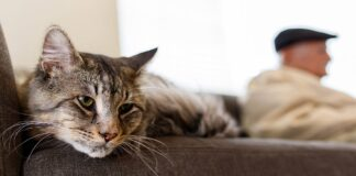 gatto anziano con vecchietto