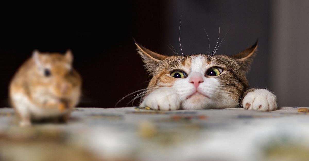 gatto osserva topo