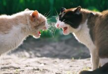 gatti in lotta