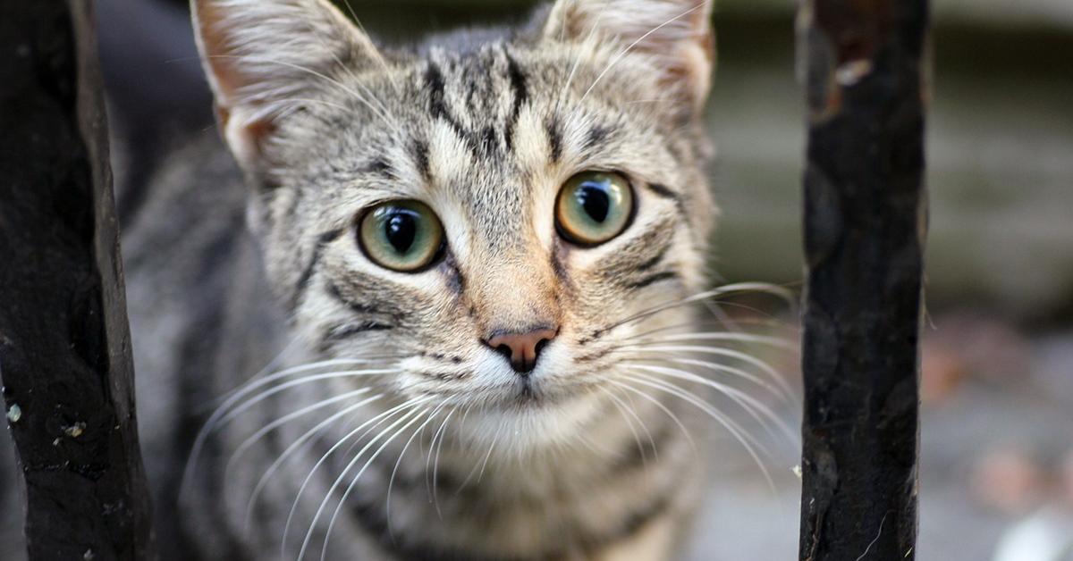 gatto che guarda con aria perplessa