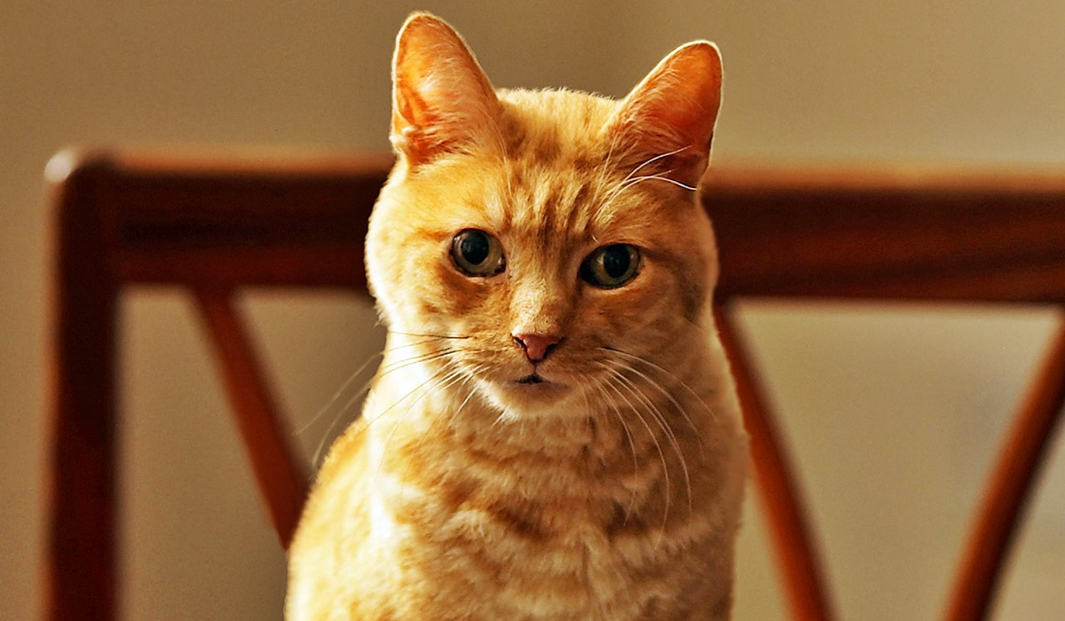 gatto con gli occhi storti